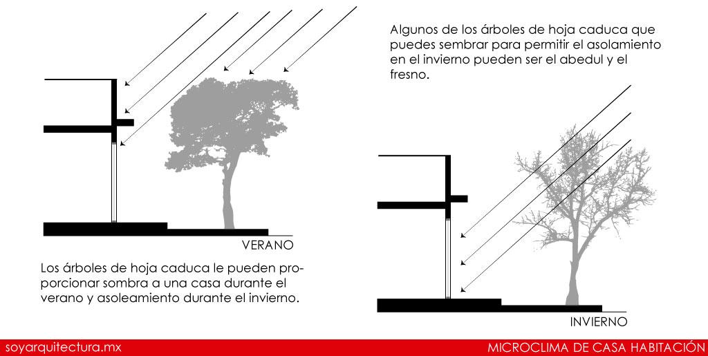 La iluminación natural se puede provocar o evitar con la correcta vegetación