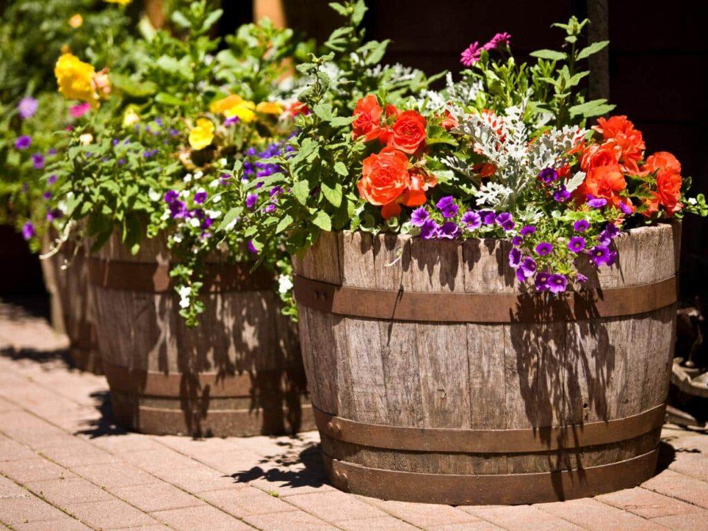 Macetas con flores de colores