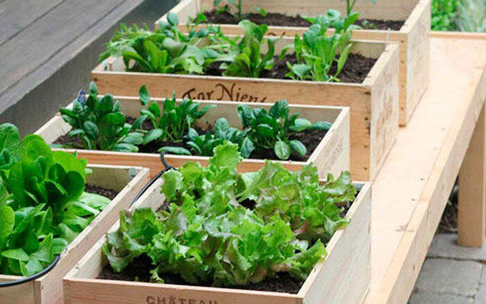 Un huerto casero es un buena idea para consumir nuestros propios productos
